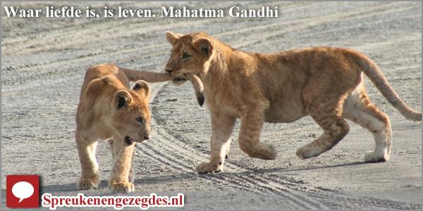 Waar liefde is, is leven. Mahatma Gandhi