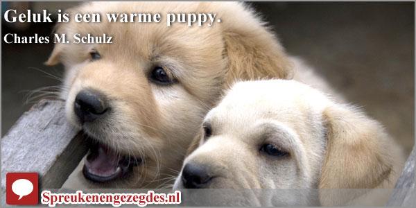 Geluk is een warme puppy.