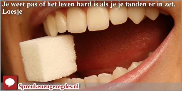 Je weet pas of het leven hard is als je je tanden erin zet. Loesje