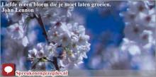 Liefde is een bloem die je moet laten groeien.