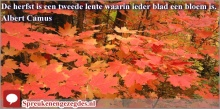 De herfst is een tweede lente waarin ieder blad een bloem is. Camus